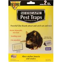 BOARDS GLUE FOR RATS REVENGE