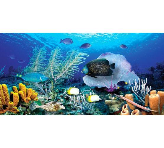 Biggies Wall Mural - Ocean Reef - Large