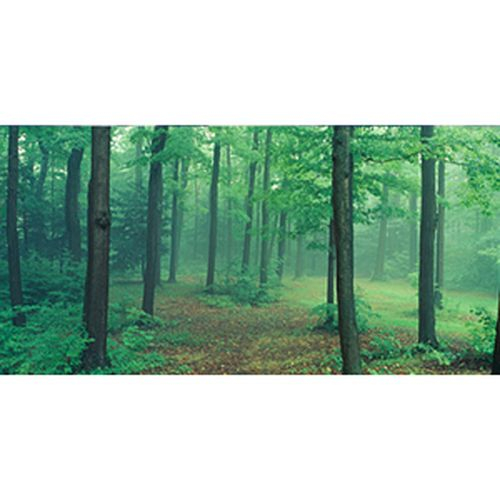 Biggies Wall Mural - Misty Forest - Extra Large