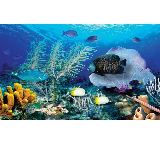 """Biggies 80"""" Ocean Window Well Scenes"""