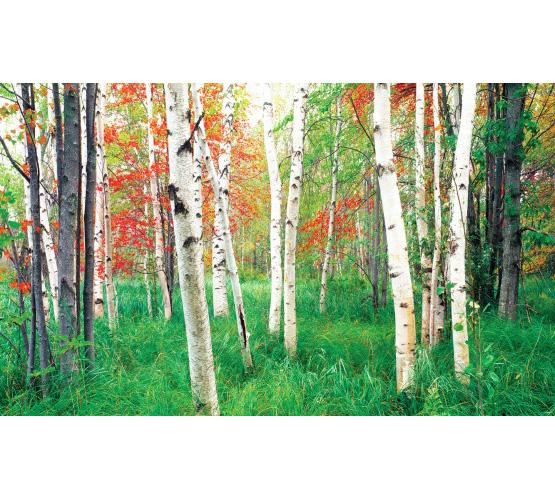 """Biggies 80"""" Woods Window Well Scenes"""