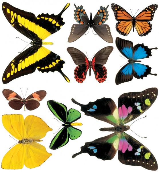 Biggies Wall Stickies - Butterflies