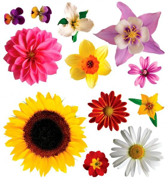 Biggies Wall Stickies - Flowers