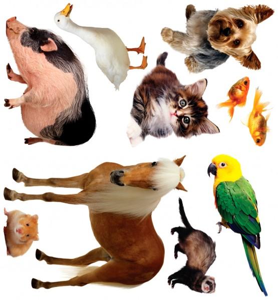 Biggies Wall Stickies - Pets