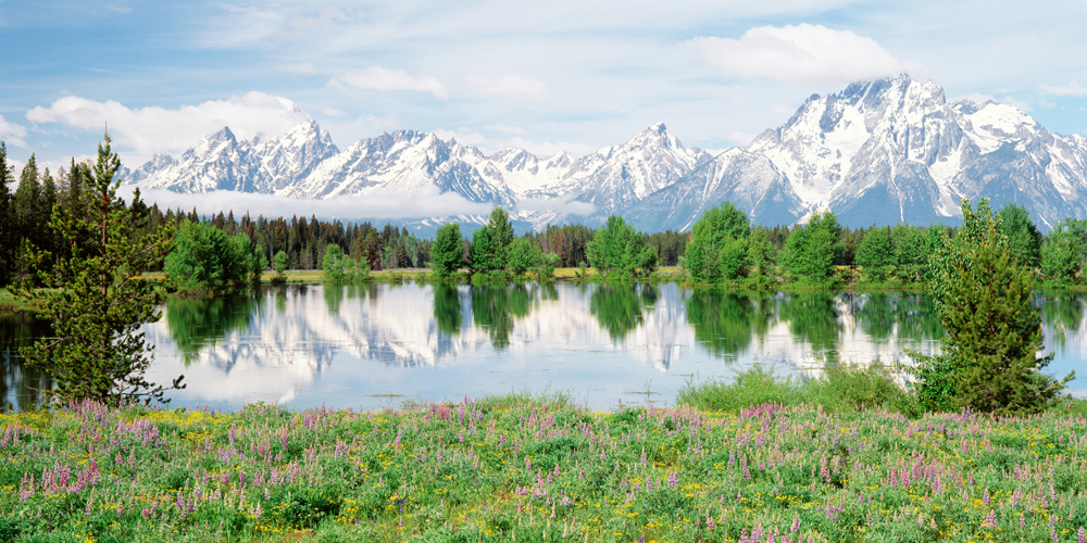 Biggies Mountain Flowers Photograph Wall Mural, Extra Large
