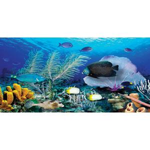 Biggies Wall Mural - Ocean Reef - Medium