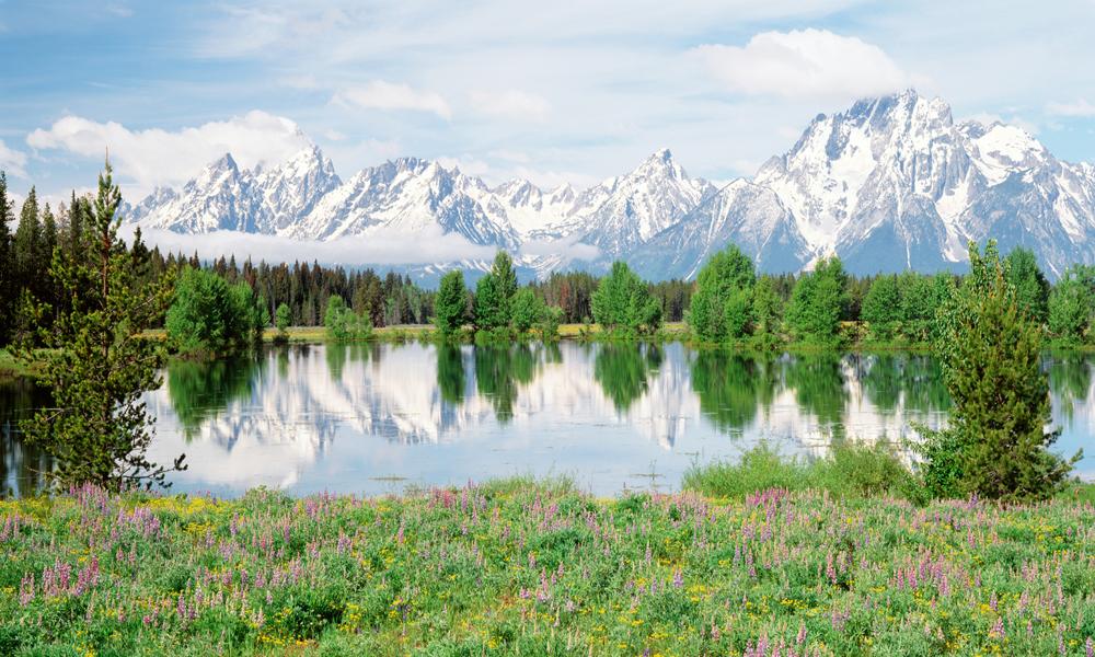 "Biggies 120"" Mountain Flower Photograph Window Well Scenes"