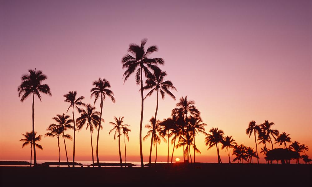 "Biggies 120"" Palm Photograph Window Well Scenes"