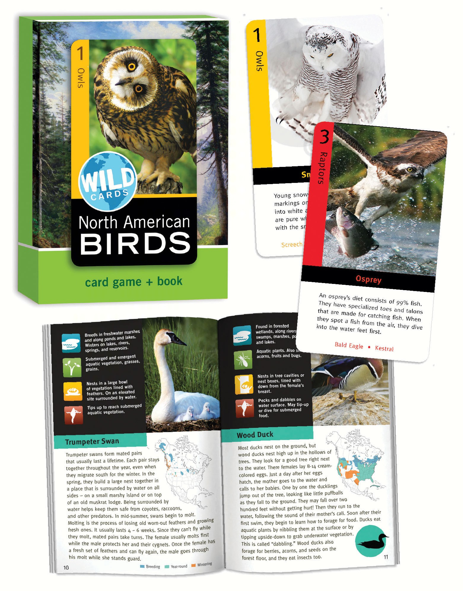 North American Birds Wild Cards