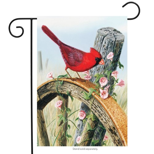 Cardinal Morning Glory Garden Flag