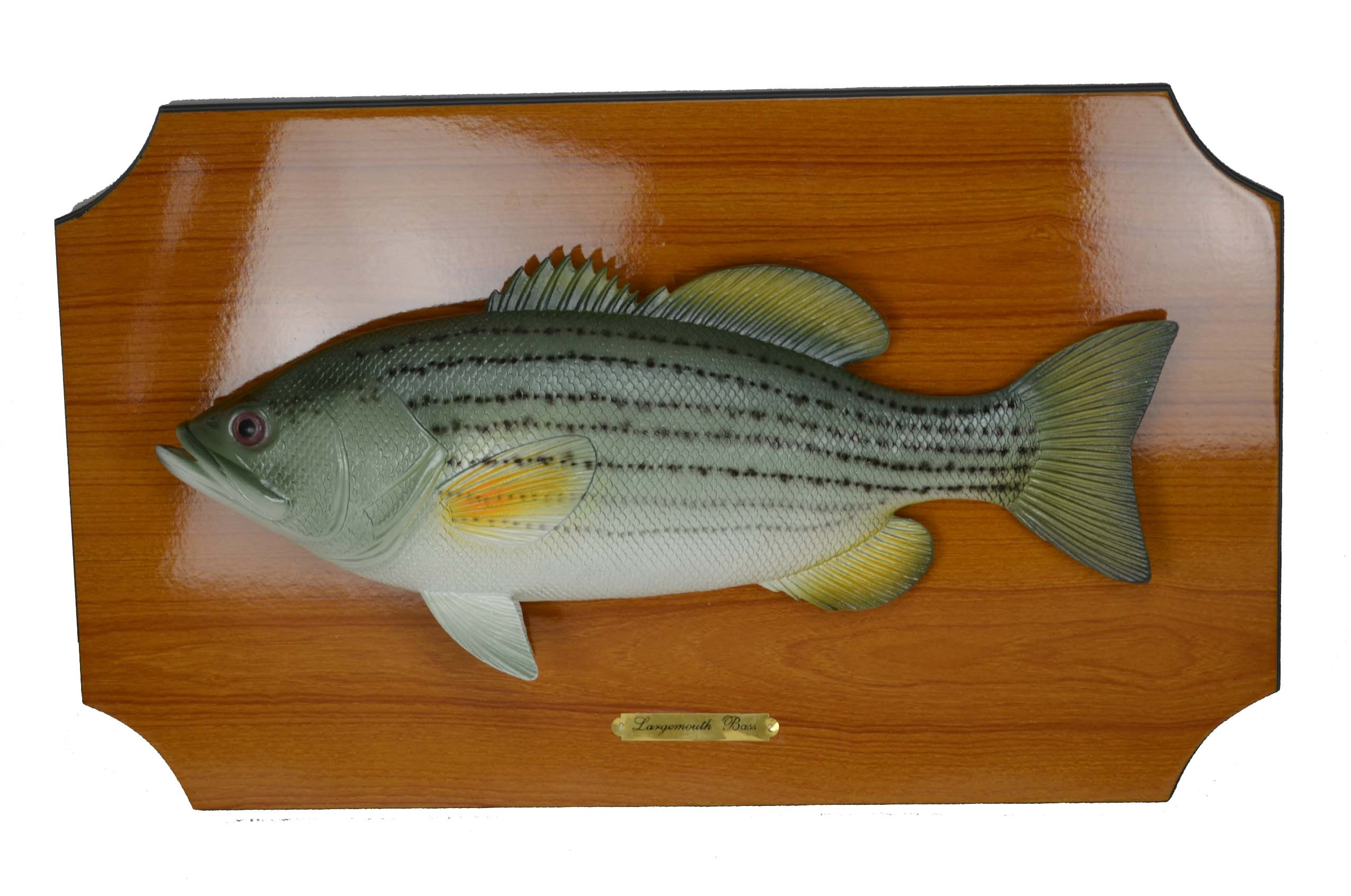 18 inch Bass Wall Plaque