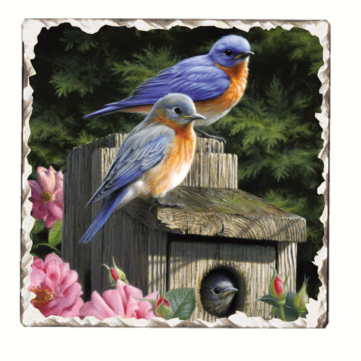 Bluebirds Number 2 Single Tumbled Tile Coaster