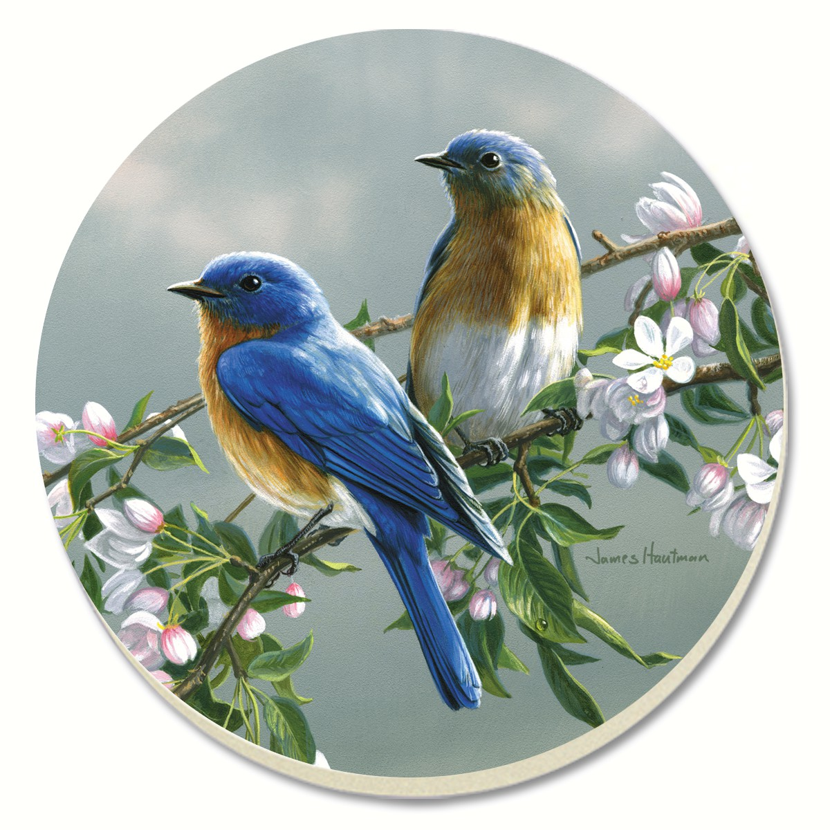 Beautiful Songbirds Bluebirds Coasters Set of 4
