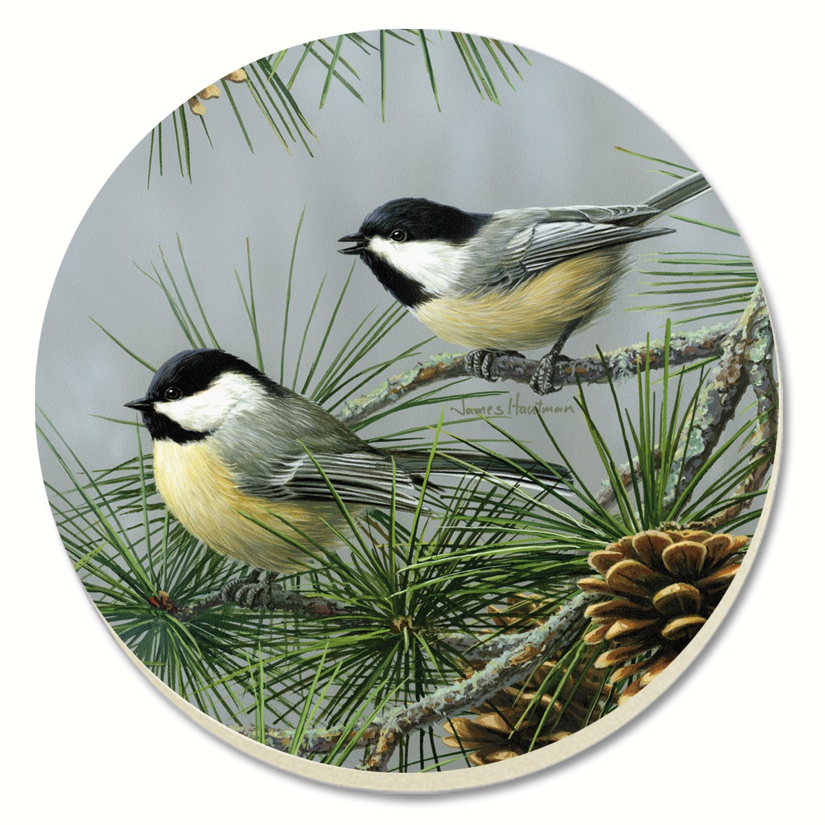 Beautiful Songbirds Chickadees Coasters Set of 4