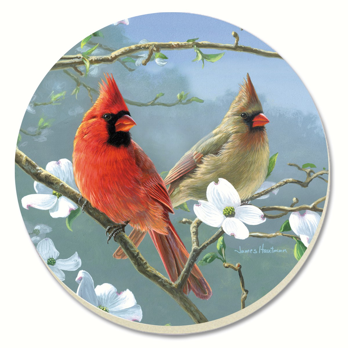 Beautiful Songbirds Cardinals Coasters Set of 4