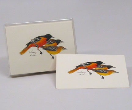 Baltimore Oriole Notecard Assortment (8 of 1 style)