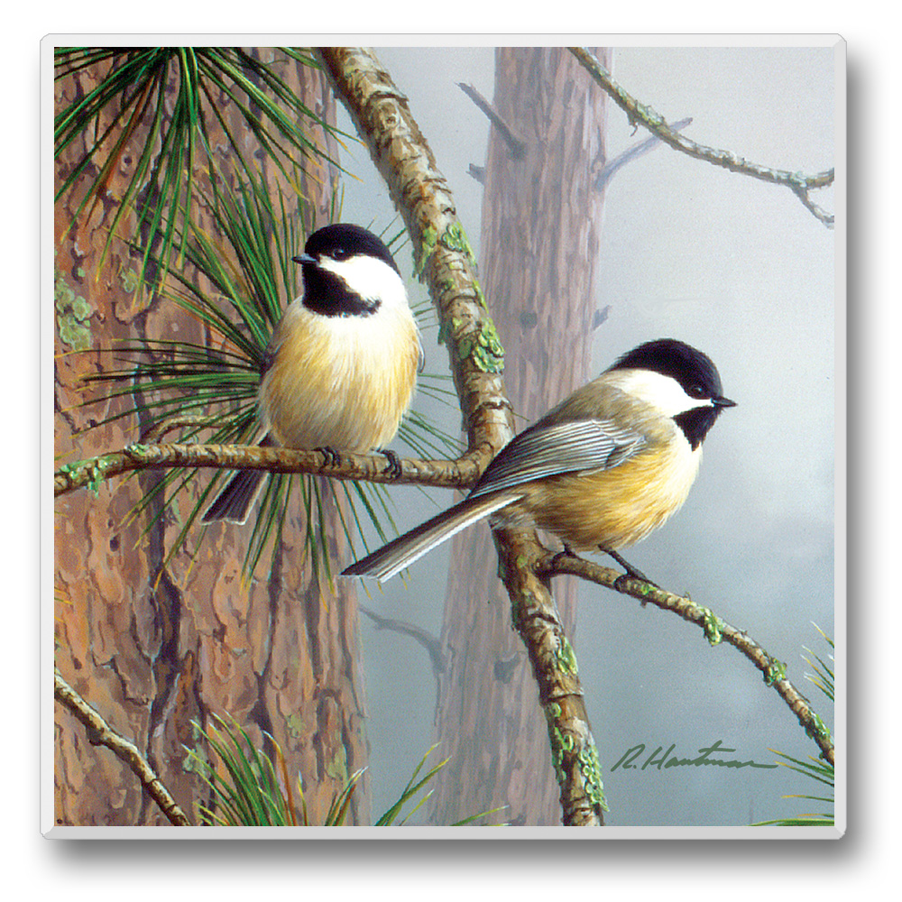 Feathered Friends Coasters Chickadee on Small Branch