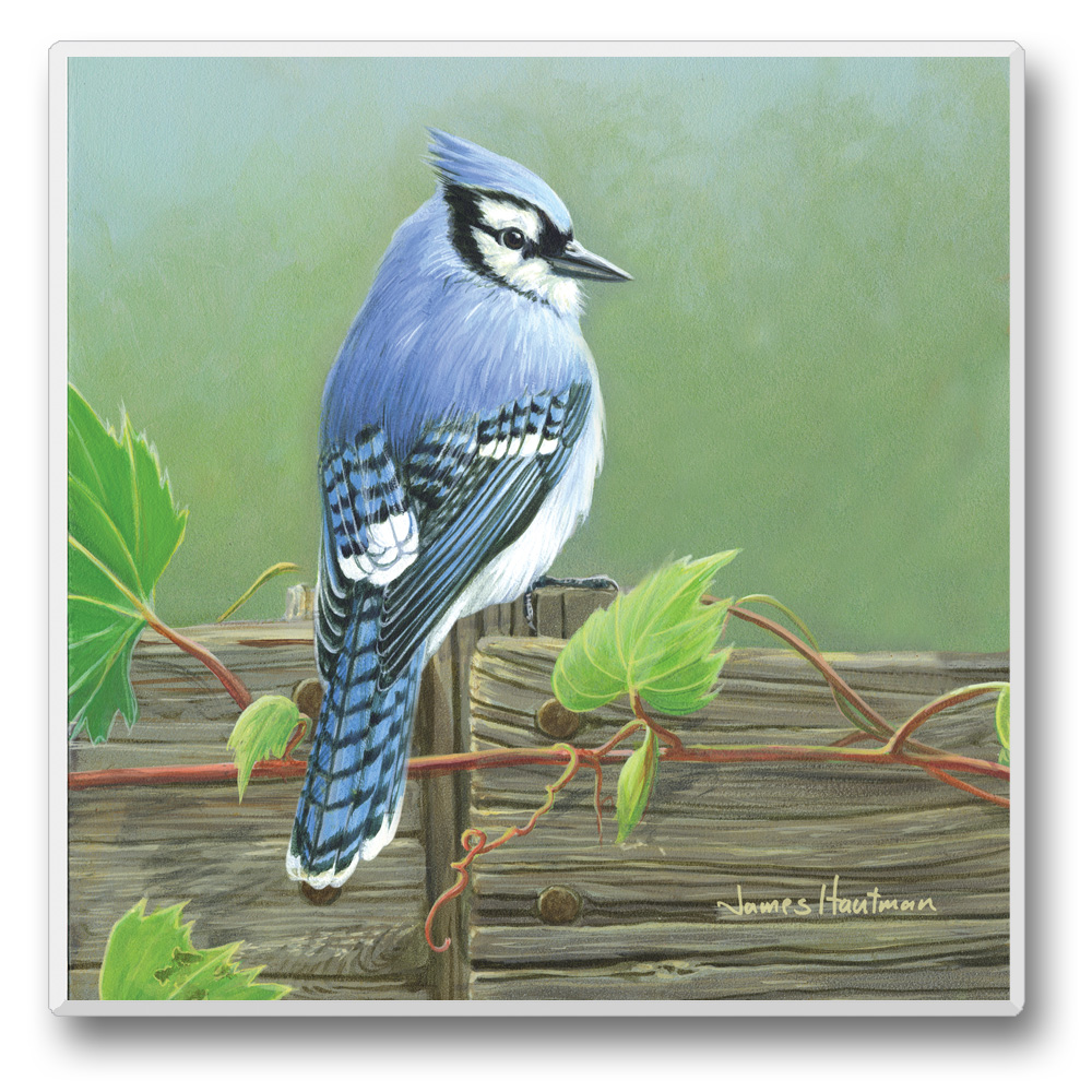 Feathered Friends Coasters Blue Jay Set of 6
