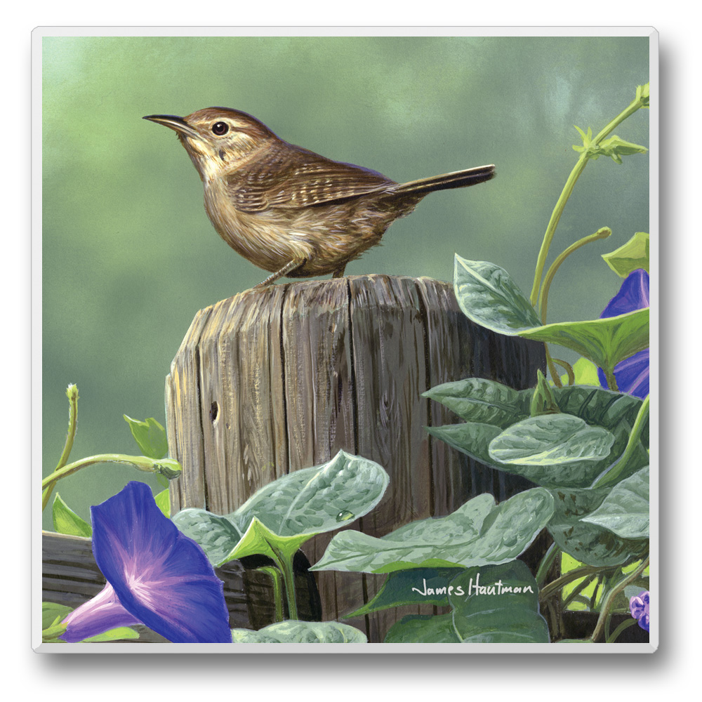 Feathered Friends Coasters Wren Set of 6