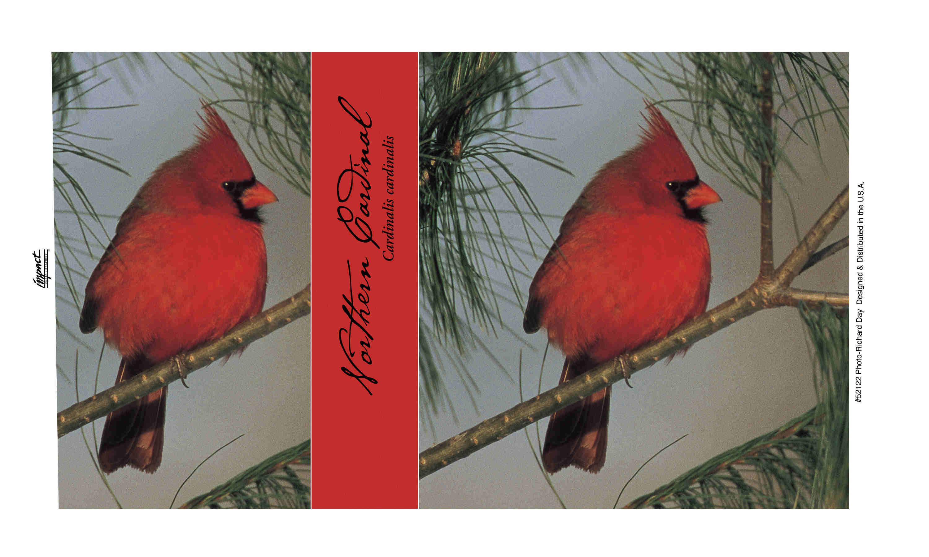 Mug 14 oz Northern Cardinal