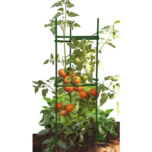 CAGE TOMATO STAKE-IT-EASY