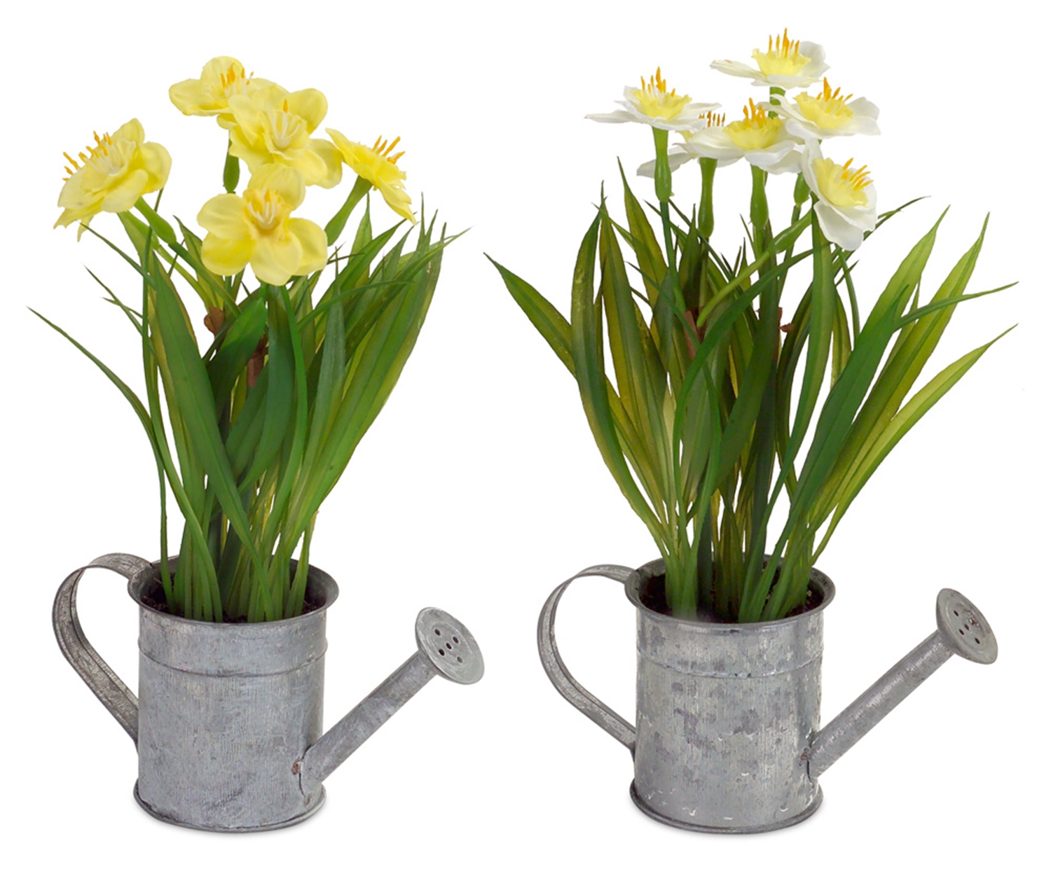 """Daffodil in Watering Can (Set of 12) 9""""H Metal/Plastic"""