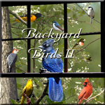 Backyard Birds II