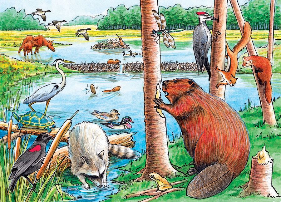 The Beaver Pond Tray Puzzle 35 piece Puzzle