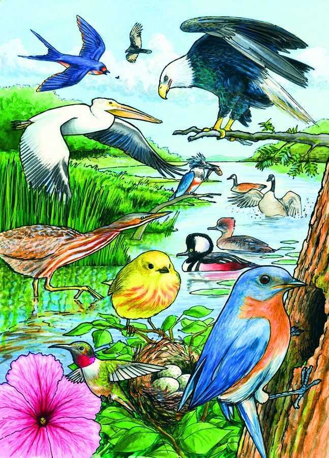 North American Birds Tray Puzzle 35 piece Puzzle