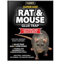 TRAP GLUE RAT 1PK 8.5 X 13.5IN