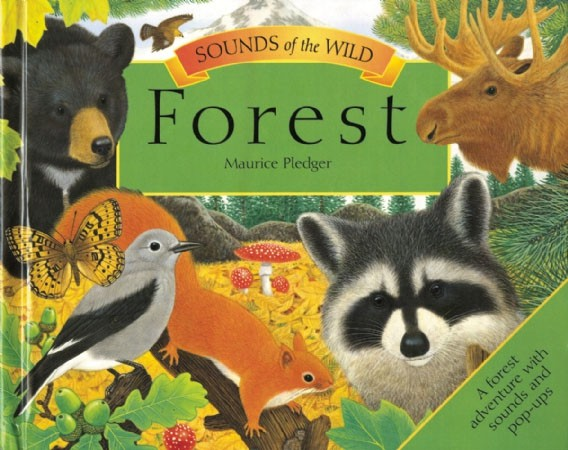 Sounds of the Wild Forest