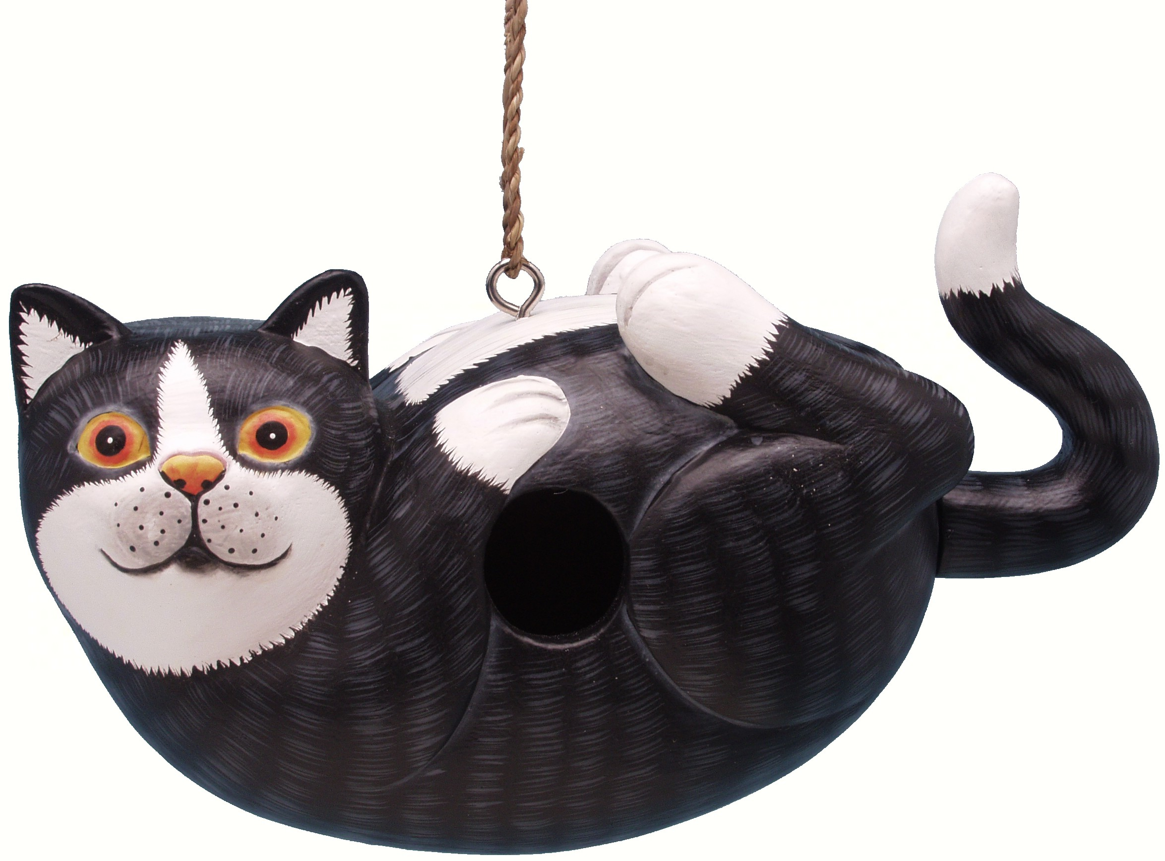 Black and White Cat on Back Birdhouse