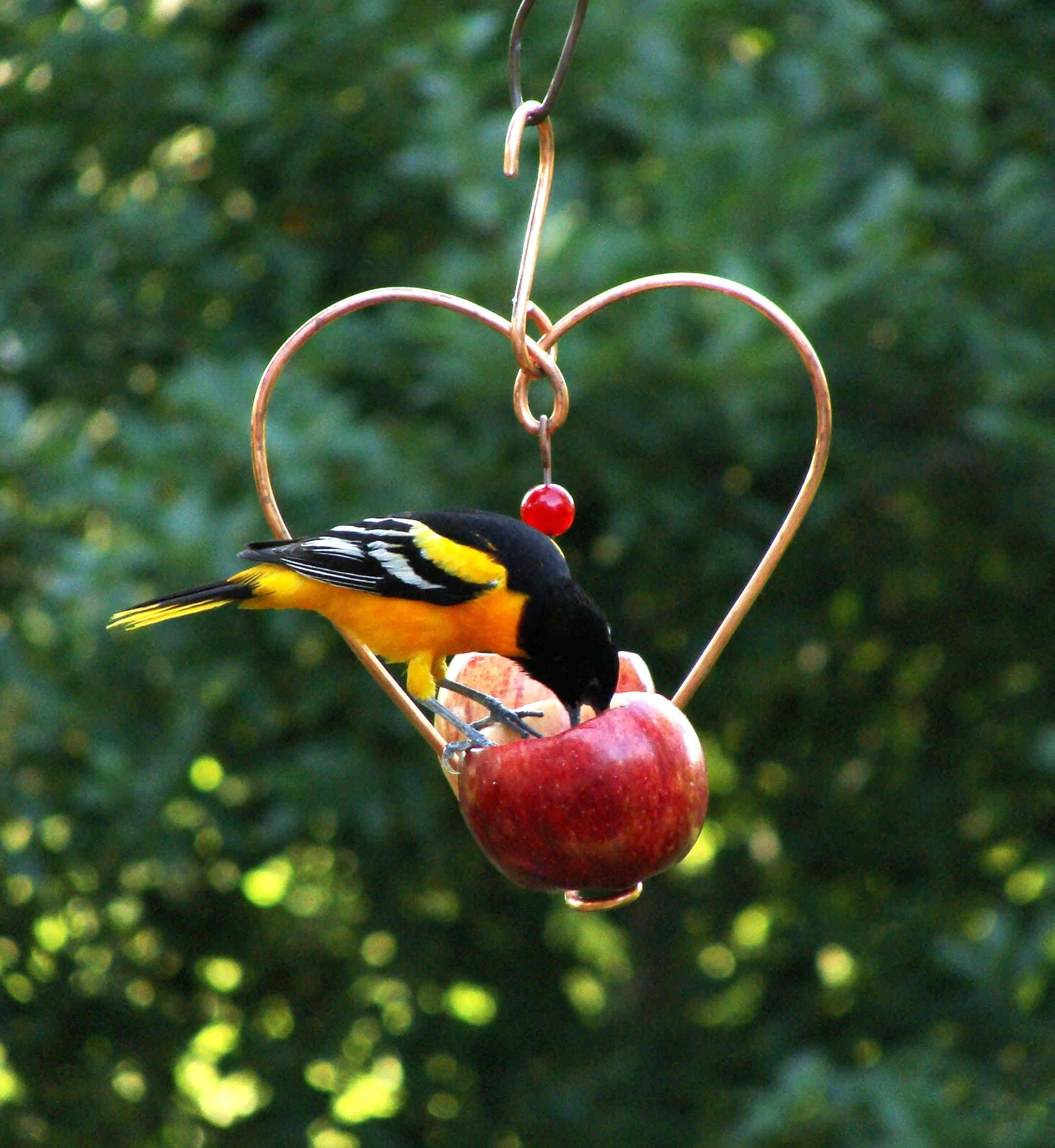 Love Birds Fruit Feeder