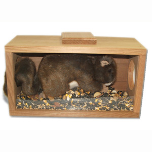 Munch-n-View Squirrel Feeder