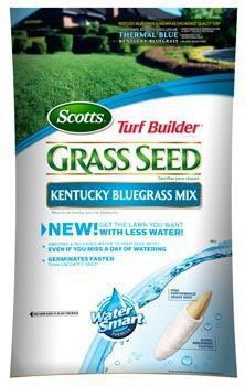 18266 3LB KENTUCKY BLUEGRASS