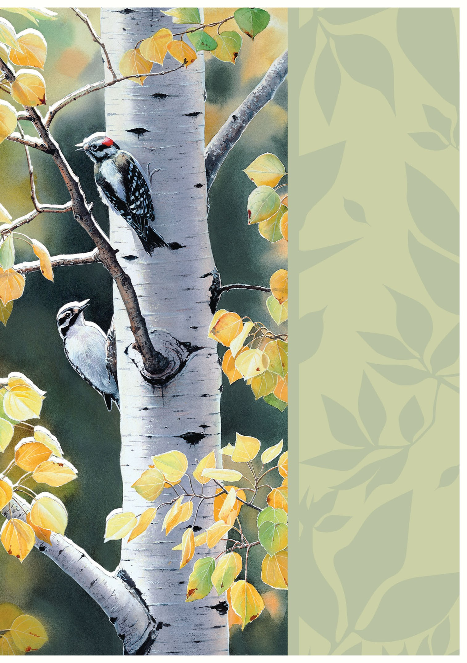 Tree free greetings products birch conversation blank kristyandbryce Image collections