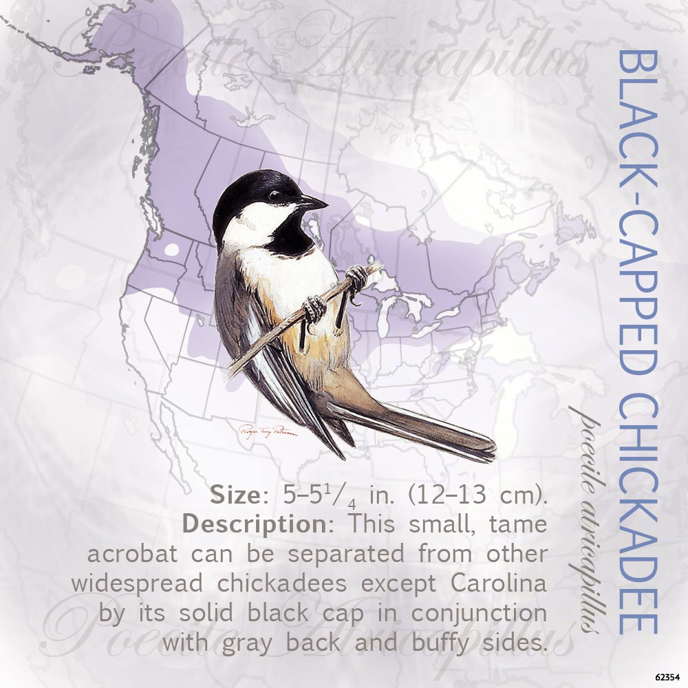Black-Capped Chickadee Magnet