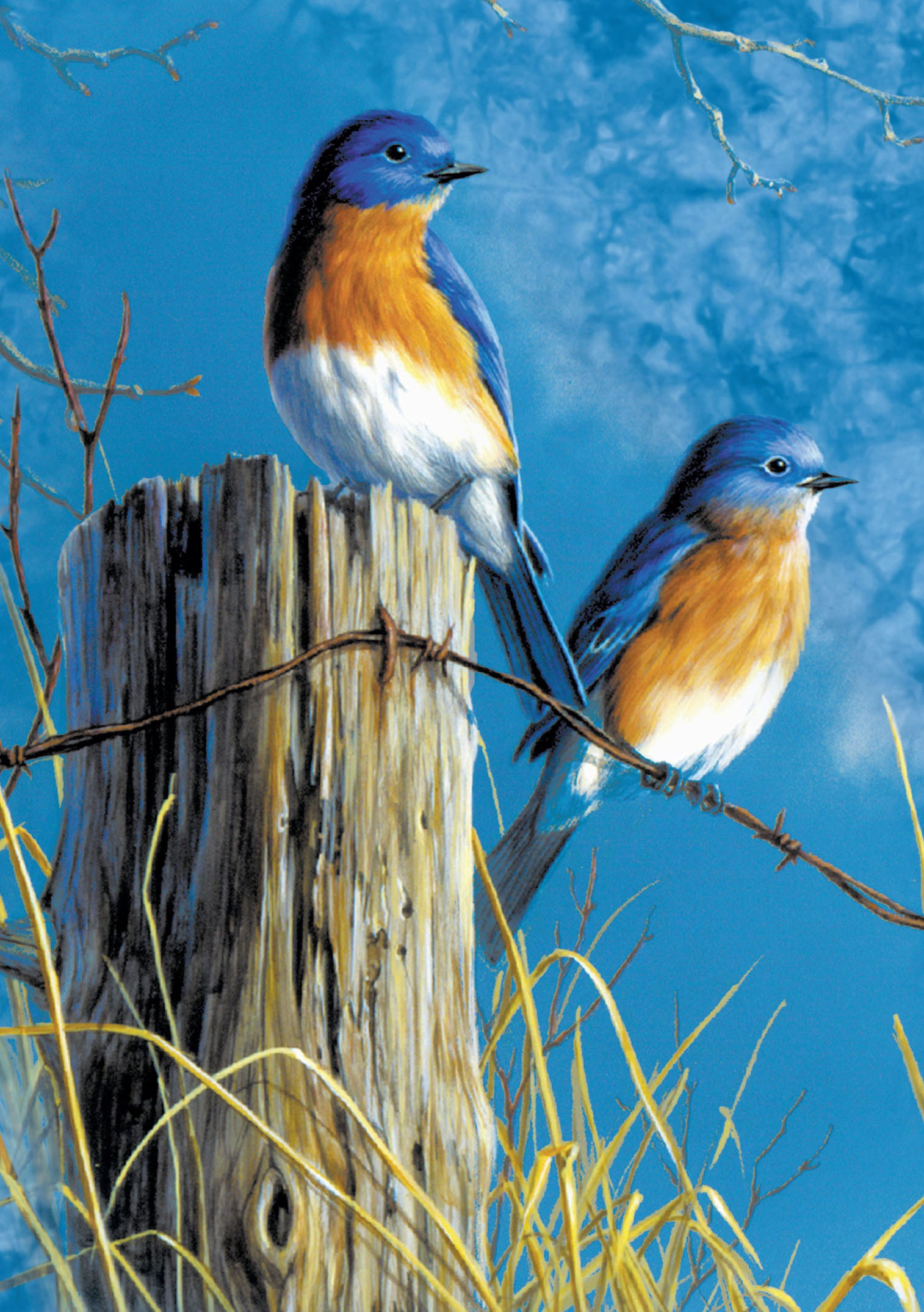 Bluebirds On Fence Blank