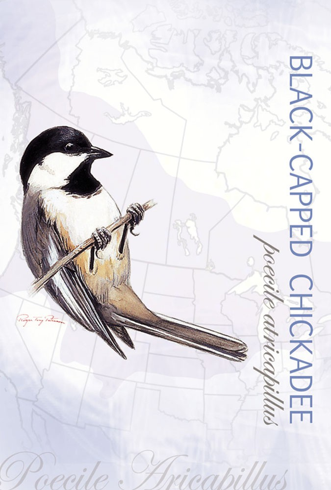 Black-Capped Chickadee Eco Notes