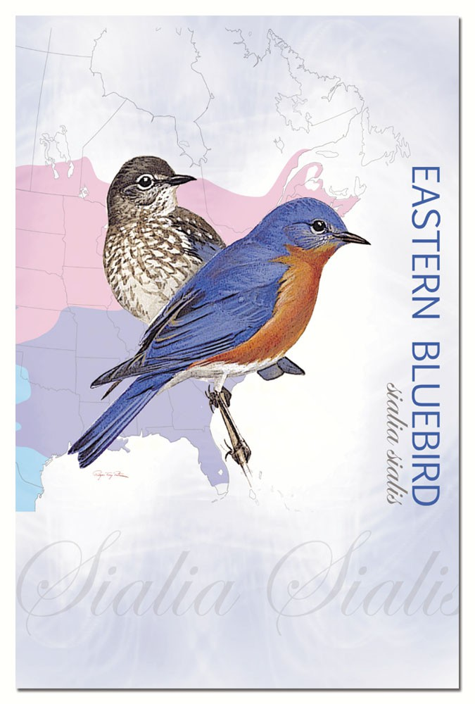 Eastern Bluebird Eco Notes