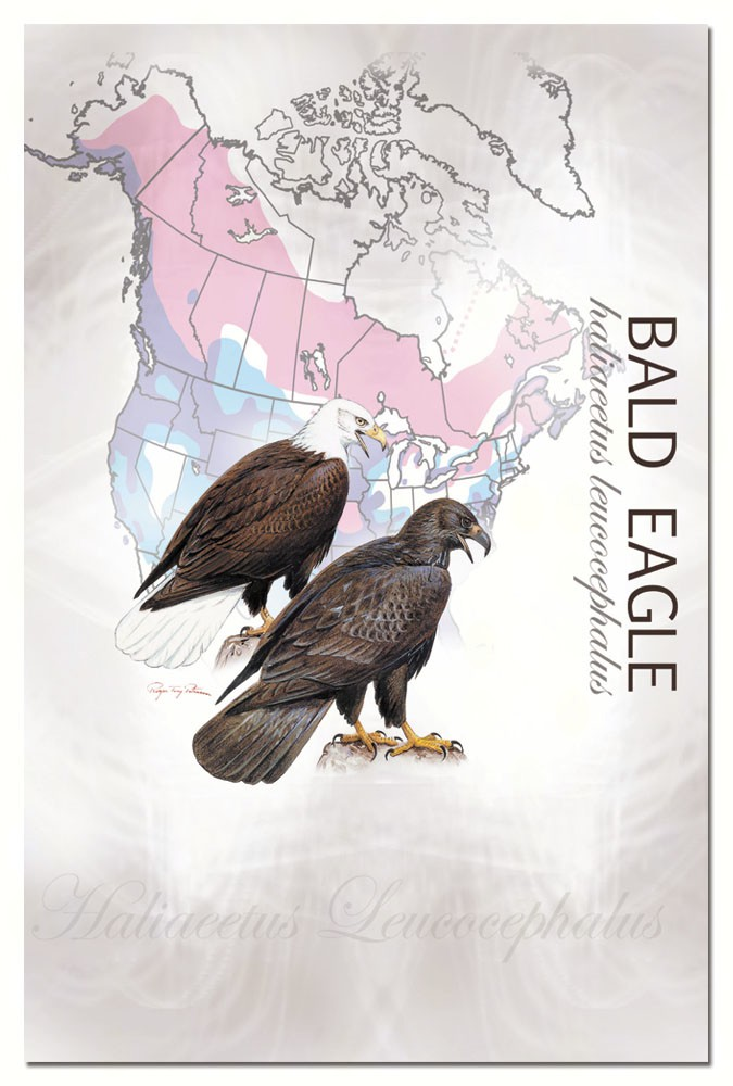 Bald Eagle Eco Notes