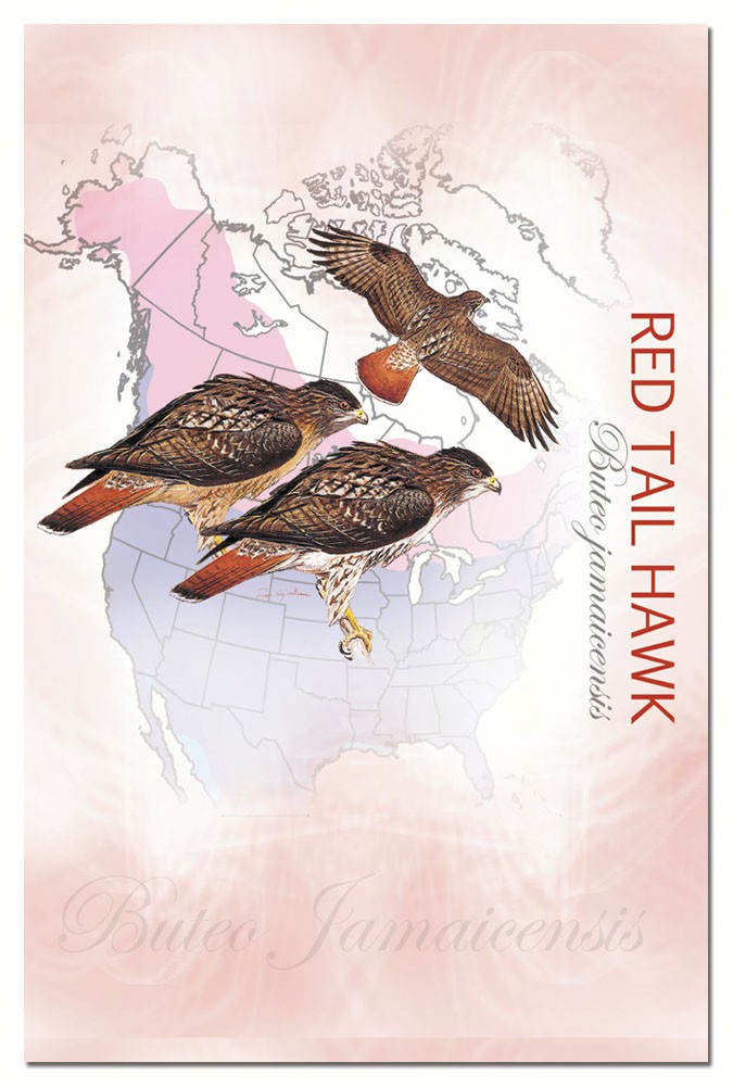 Red Tail Hawk Eco Notes