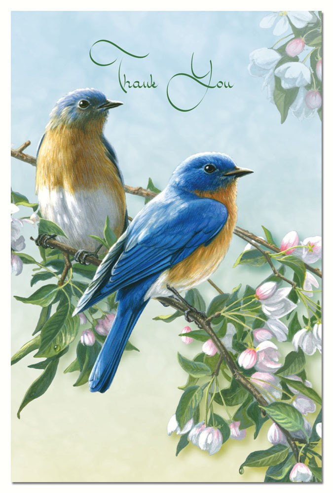 Bluebird Branch Thank You Notes