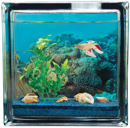 Aquabeach Betta Personal Aquarium