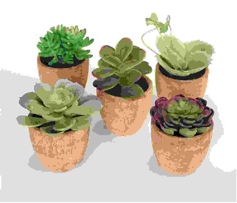 "Potted Succulent (Set of 5) 4""H-7.5""H Plastic/Terracotta"
