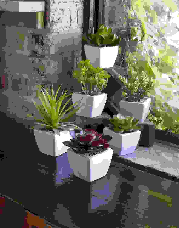 """Potted Succulent (Set of 6) 7""""H Ceramic/Plastic"""
